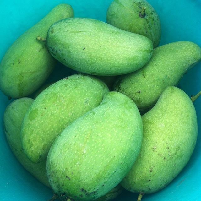 Pico Mangoes
