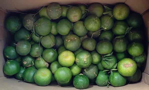 Sinturis citrus fruits