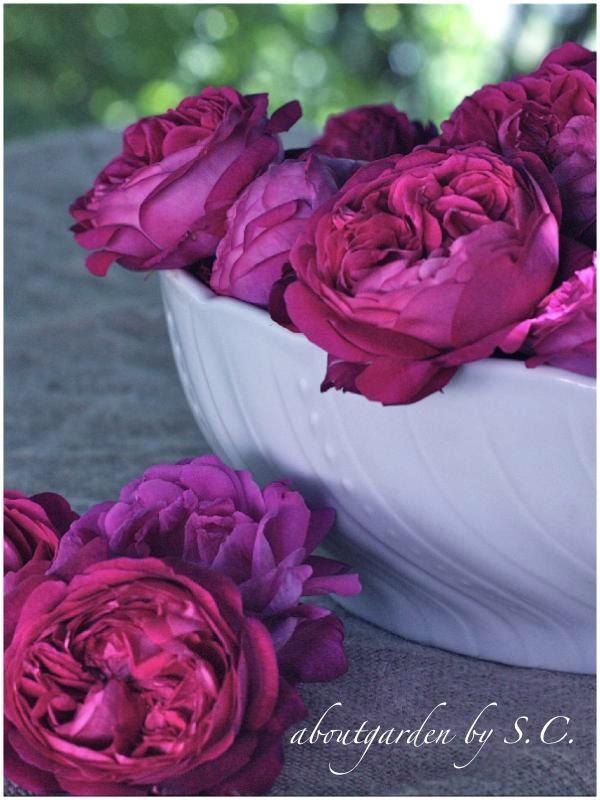 corolle di rose da sciroppo