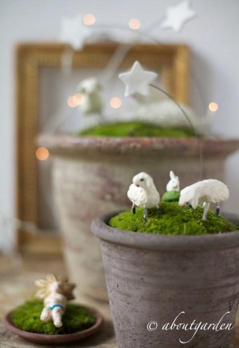 Presepe in vaso Natale al VERDE