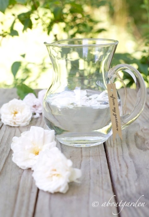 acqua alla rosa