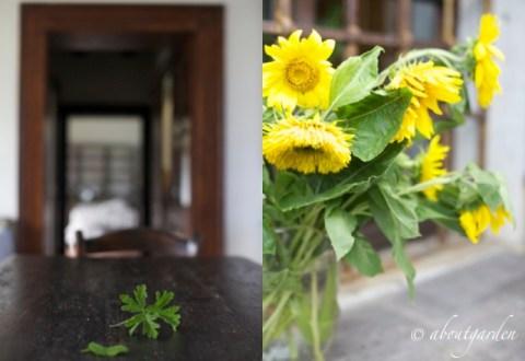 casa e fiori