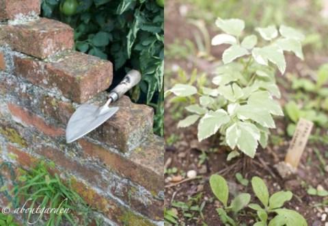 orto giardino fiorirà un giardino