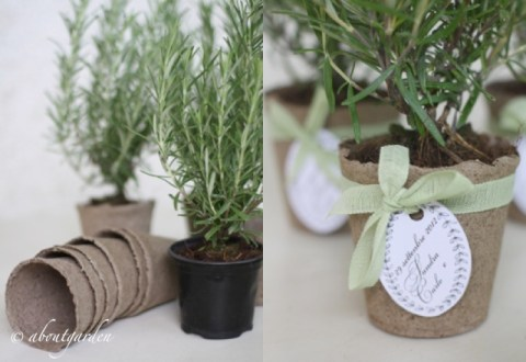 favours rosemary