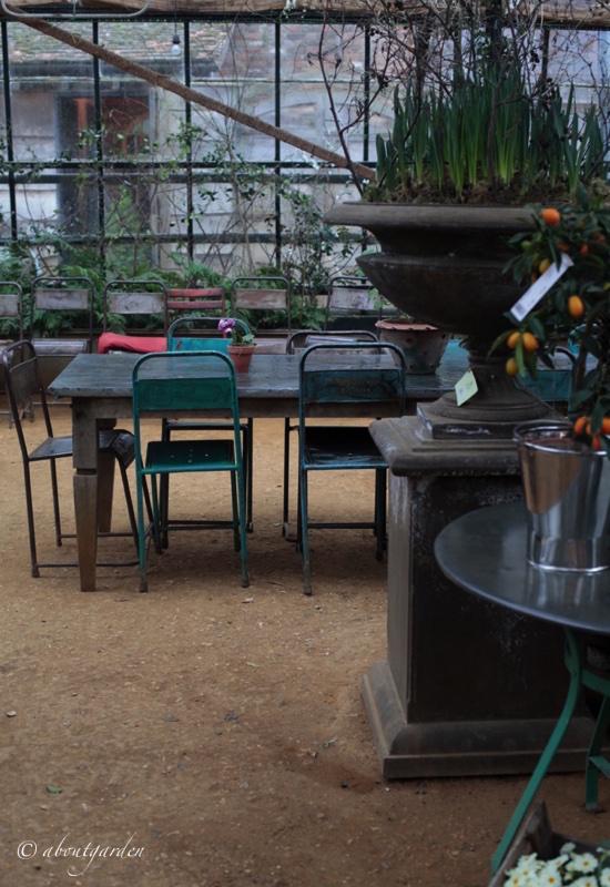 serra agrumi shop petersham