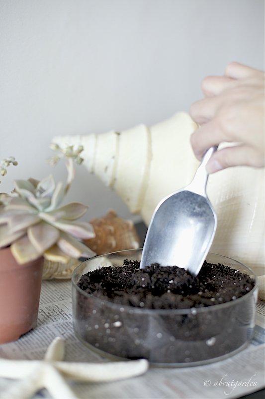 terriccio per succulente