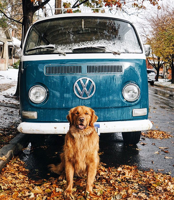 traveling-dog-aspen-the-mountain-pup-instagram-39