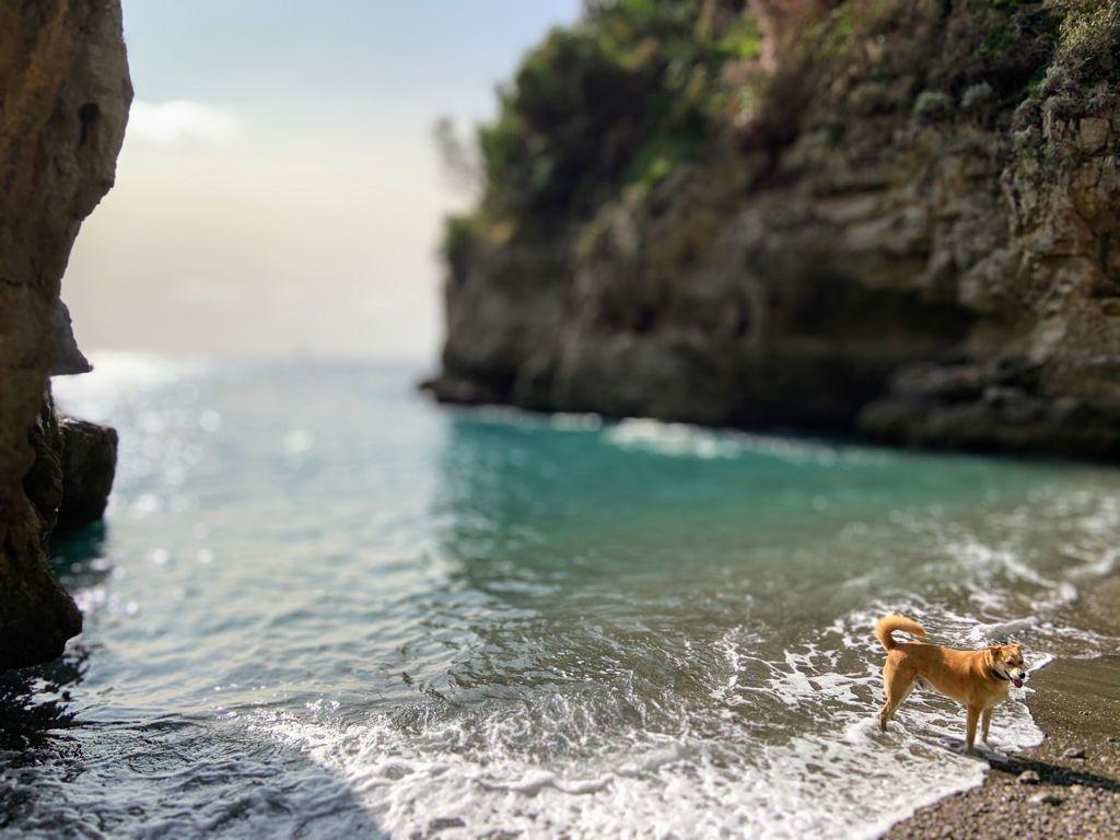 Dove andare in vacanza con animali About Sorrento