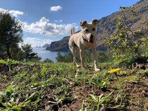 In vacanza con gli animali a Sorrento e dintorni