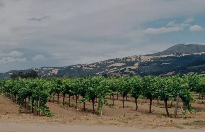 Murphy-Goode Winery vineyards
