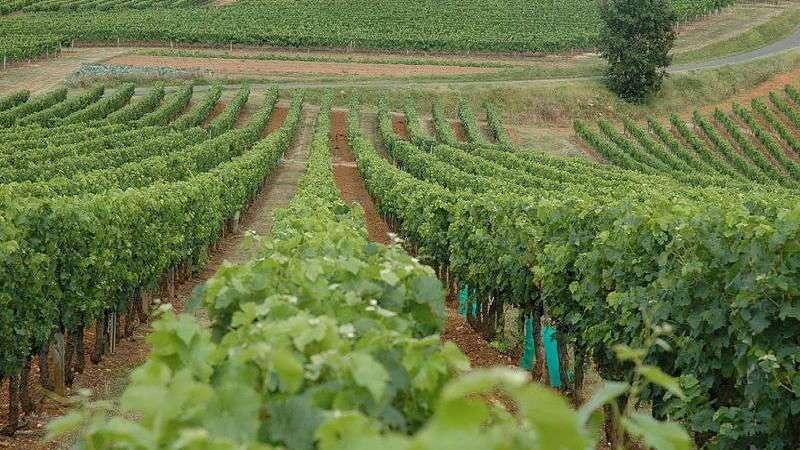 Спрос на кошерные вина будет повышаться