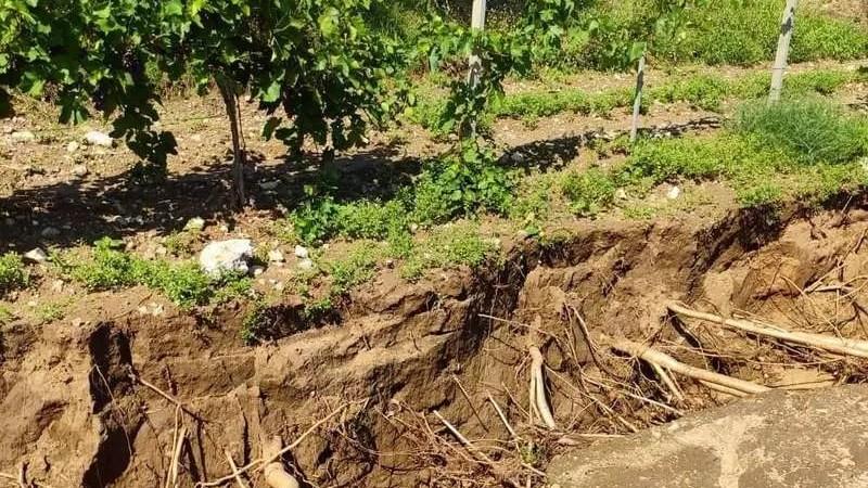 Поврежденные виноградники обернутся повышением цен на вино