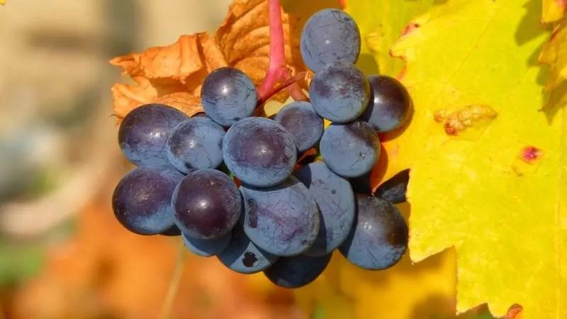 Еврокомиссия поддержит пострадавшее европейское виноделие