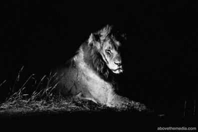 Kruger-National-Park-2016-229