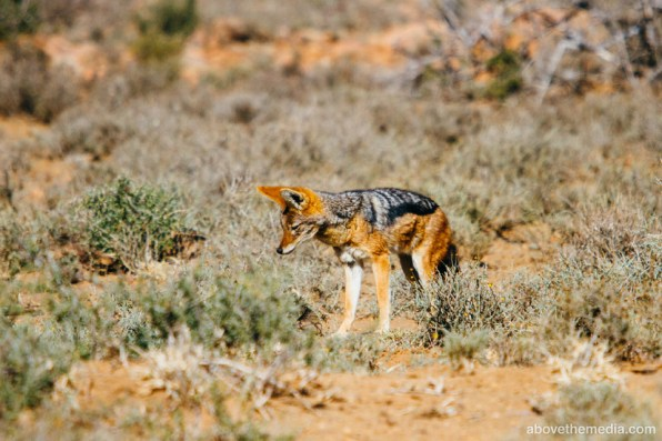 Karoo National Park, July 2016