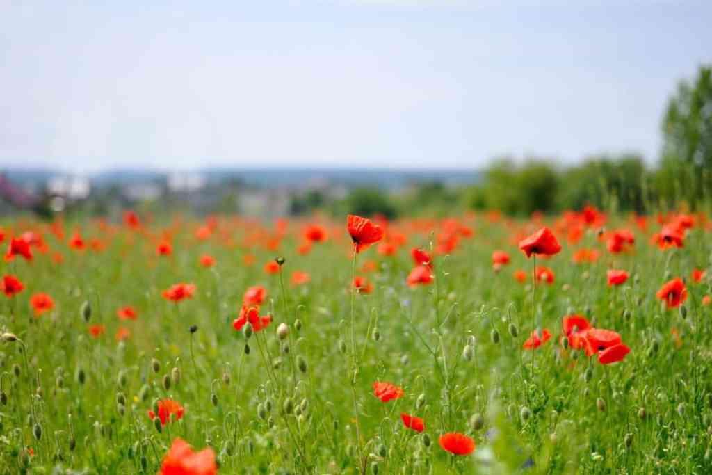fleurs d'été plein soleil