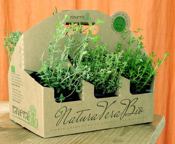 plante a mettre en jardinière