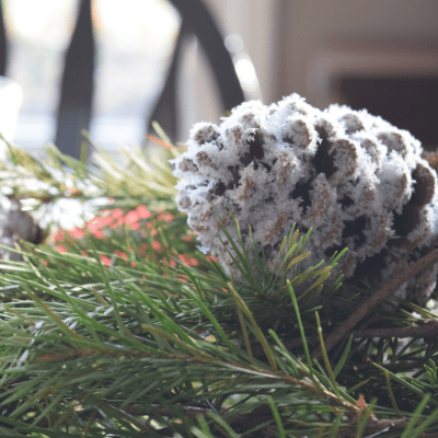 A Brick Home: DIY snow pinecones, pinecone crafts, diy pinecone crafts, diy pinecone crafts christmas, christmas crafts