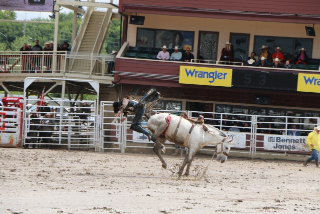The Calgary Stampede The World S Wildest Rodeo A Broad
