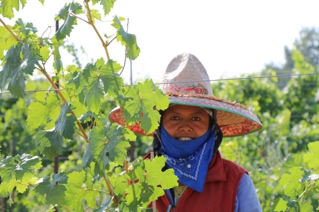 Idaho Wine