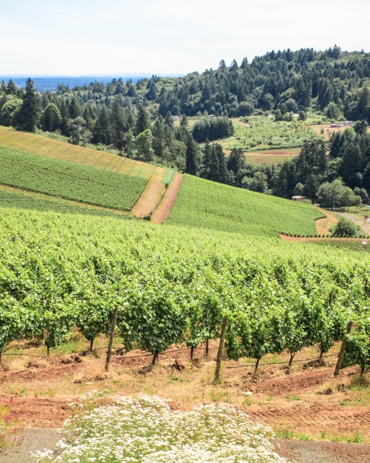 Oregon wine country itinerary