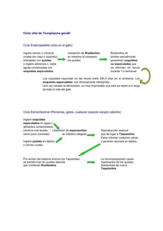Posicionamiento GEMFE ante toxoplasmosis_04
