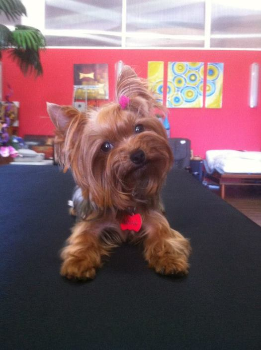 Hanna, 2º perro adulto