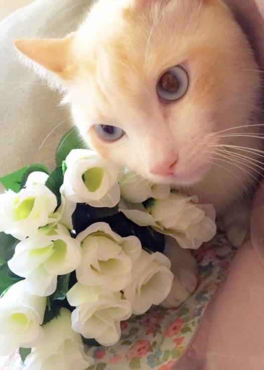1º clasificado gatos adultos: Coco