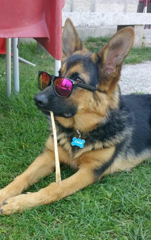 1º clasificado cachorros: Zeus (portada)