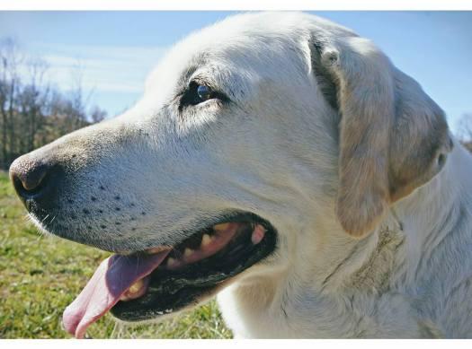 2º clasificado perros adultos: Luna