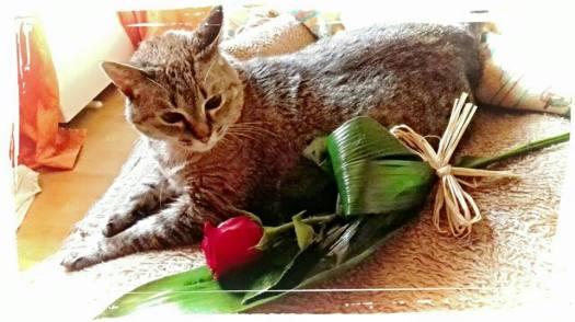 3º clasificado gato adulto: katy.