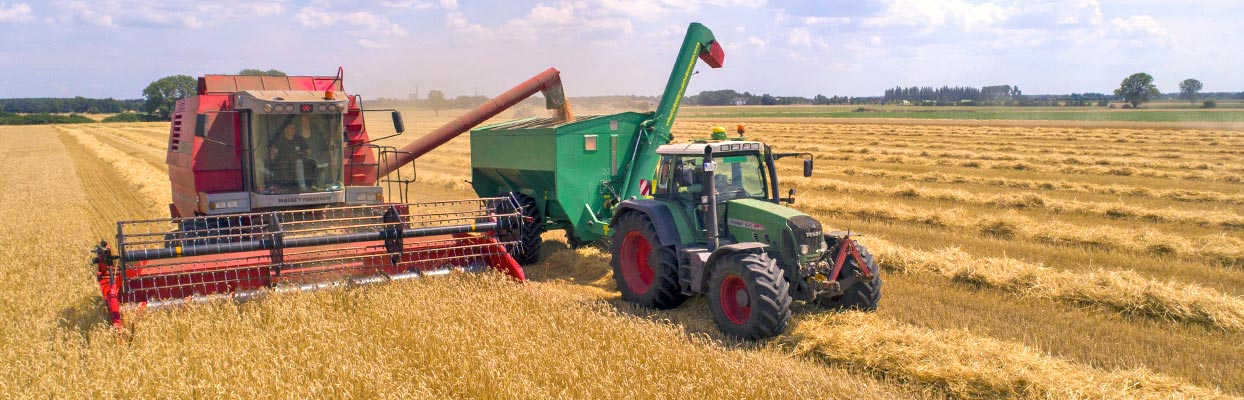Récolte du blé avec tracteur et moissonneuse