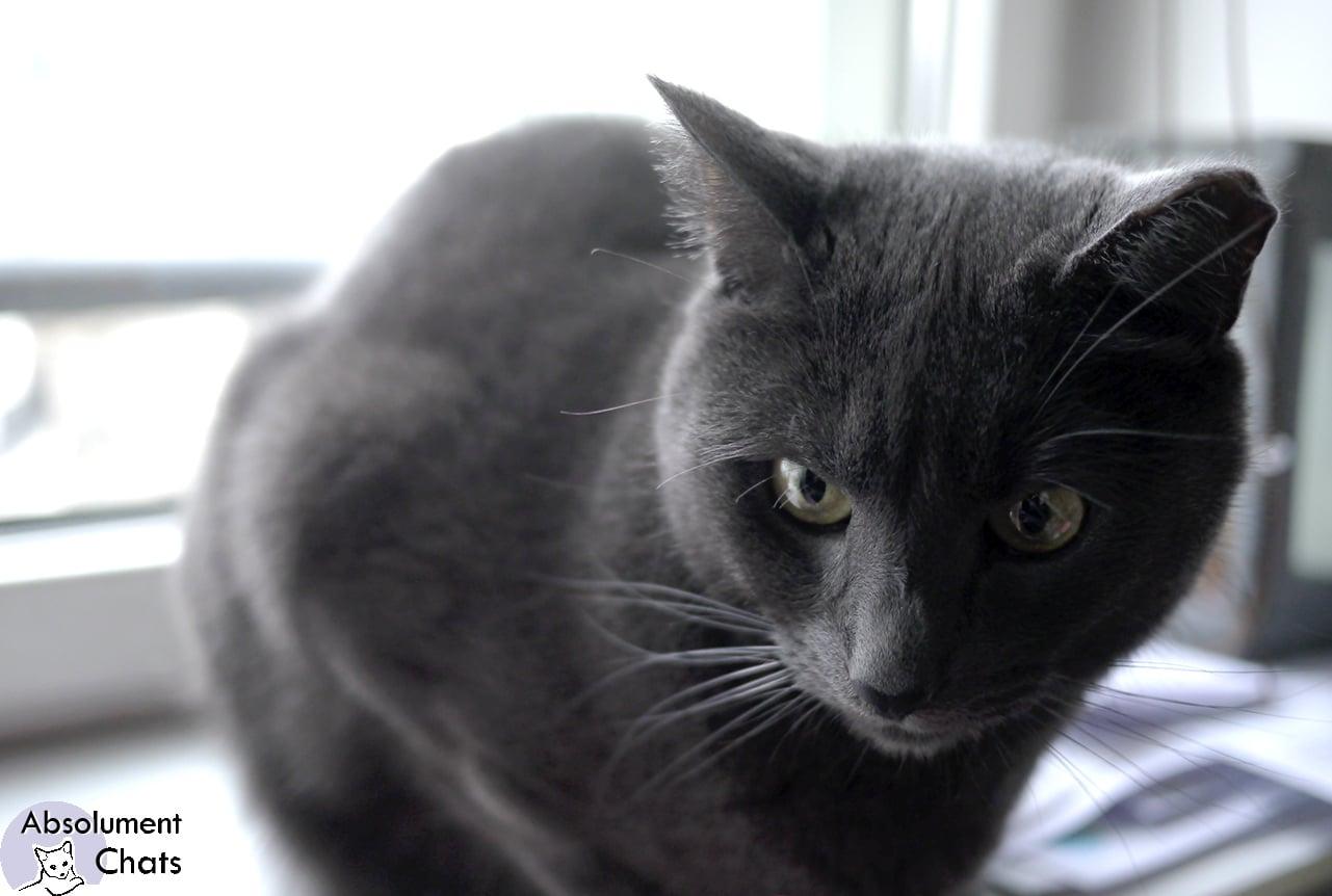 mon chat fait pipi sur mon lit cool en finir avec la malproprete de votre chat chat fait pipi. Black Bedroom Furniture Sets. Home Design Ideas