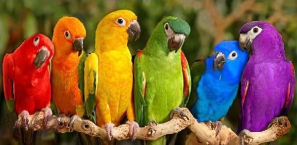 Image result for parrots