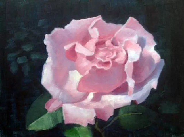armand cabrera pink rose