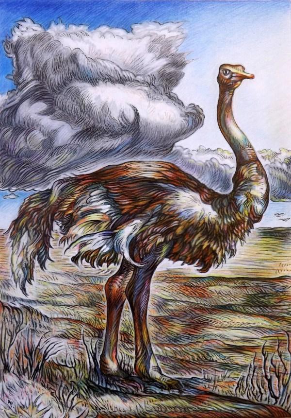 Austen Pinkerton Artwork Ostrich Original Drawing