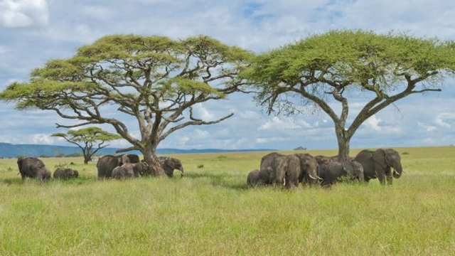African Safari Across Kenya and Tanzania