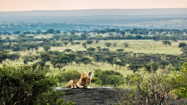Best of Kenya and Tanzania Budget Safari