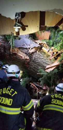 Puget Sound Fire House Tree Rescue (2)
