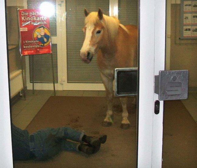 cavallo al bancomat