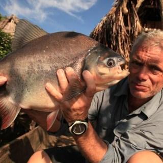 Pacu, il pesce che uccide i pescatori strappando loro i testicoli