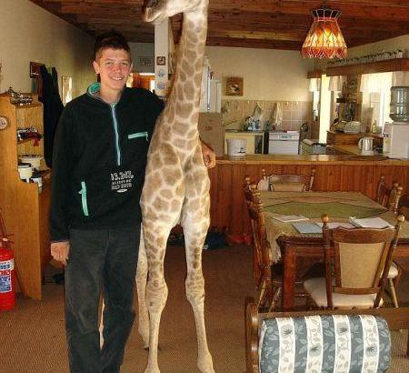 Fenne la giraffa casalinga (1)