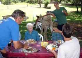 Fenne la giraffa casalinga (2)