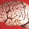 Uomo testa di cervello