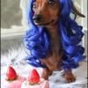 Parrucche per animali domestici (3)