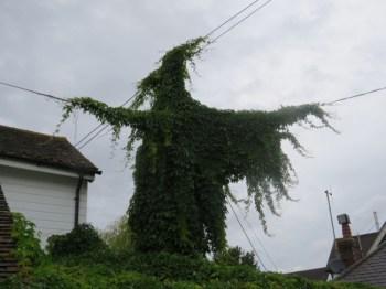 """Edera cresce a forma di """"strega"""" che lancia incantesimi"""