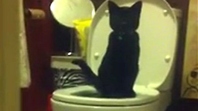 Insegna al proprio gatto a usare il water