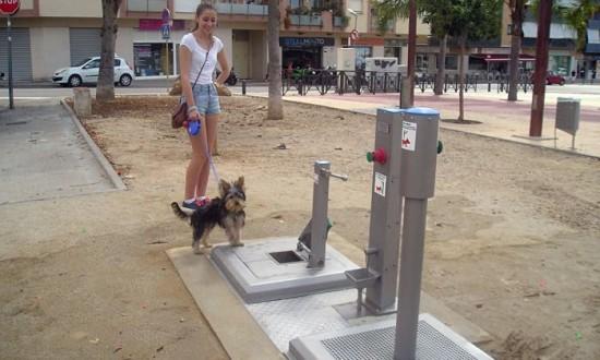 Bagni pubblici per cani in Spagna (2)
