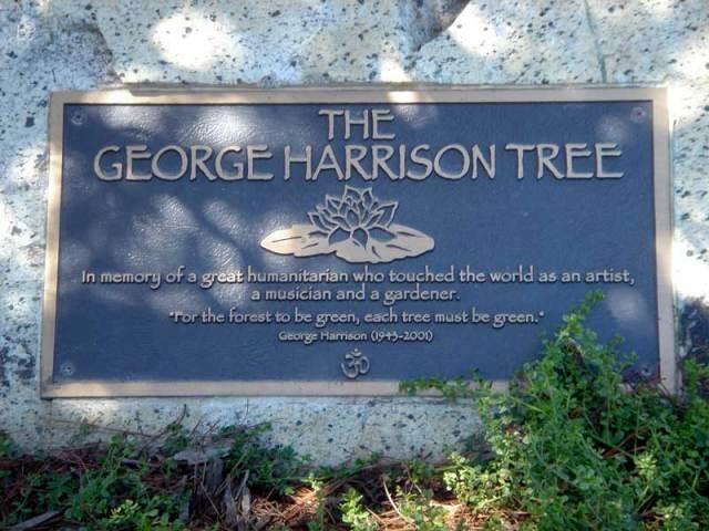Albero commemorativo di George Harrison