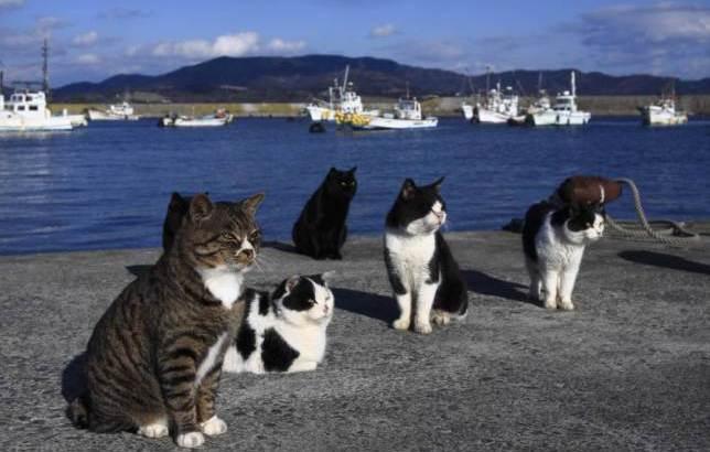 L'isola dei gatti